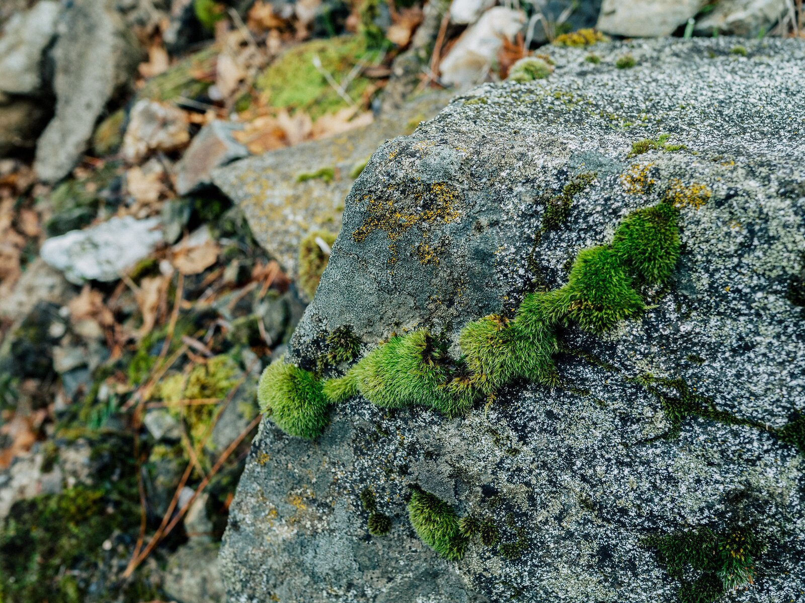PenF_Jan18_21_moss_on_rock.jpg