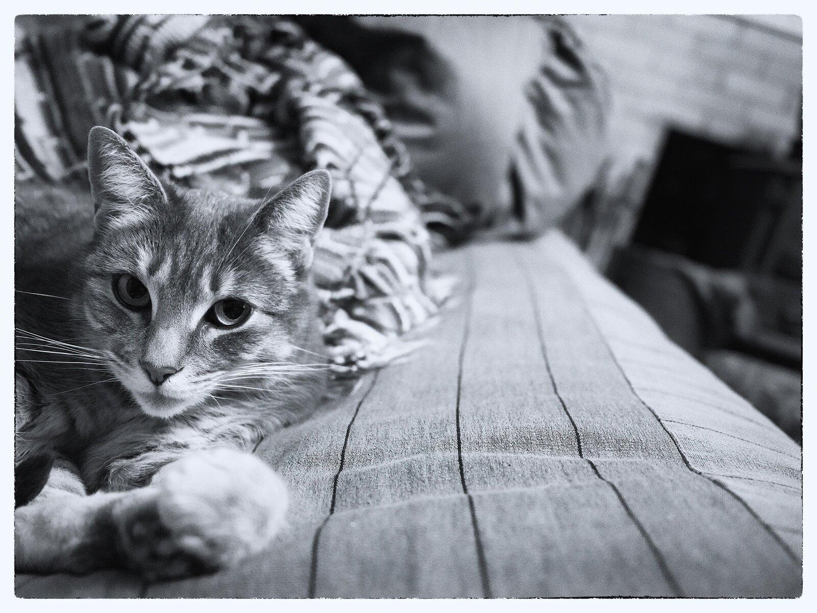 PenF_Jan23_21_midnight_cat.jpg