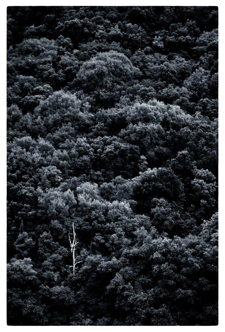 PICTOGRAMAX - 2009 - NAKED.jpg