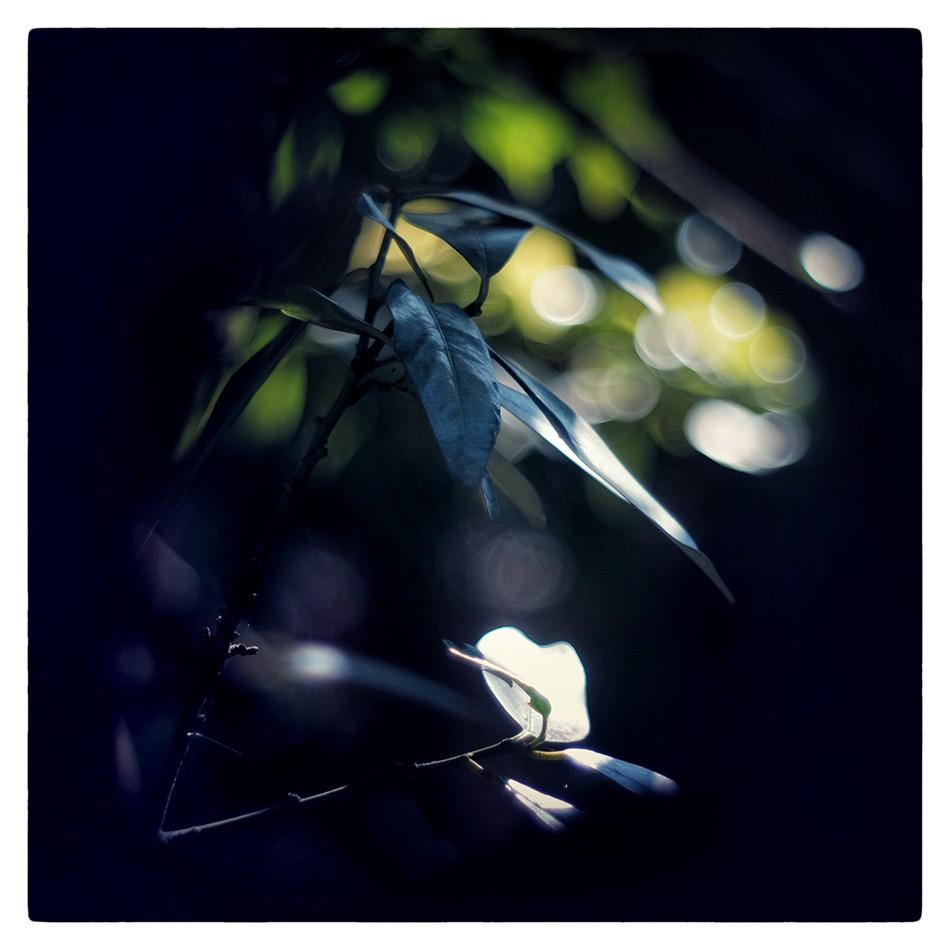 PICTOGRAMAX - 2020 - APRIL CAMERADERIE - 16 - LENIS.jpg