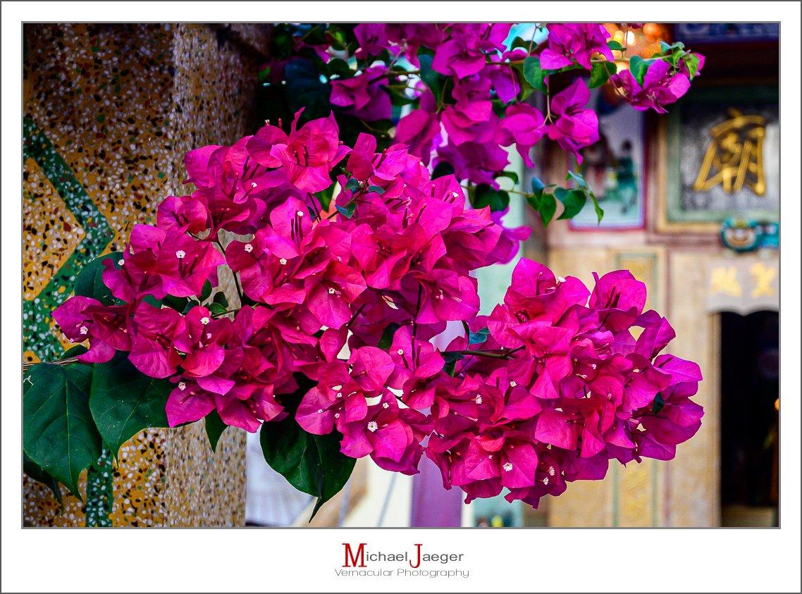 pink bloss-1.jpg
