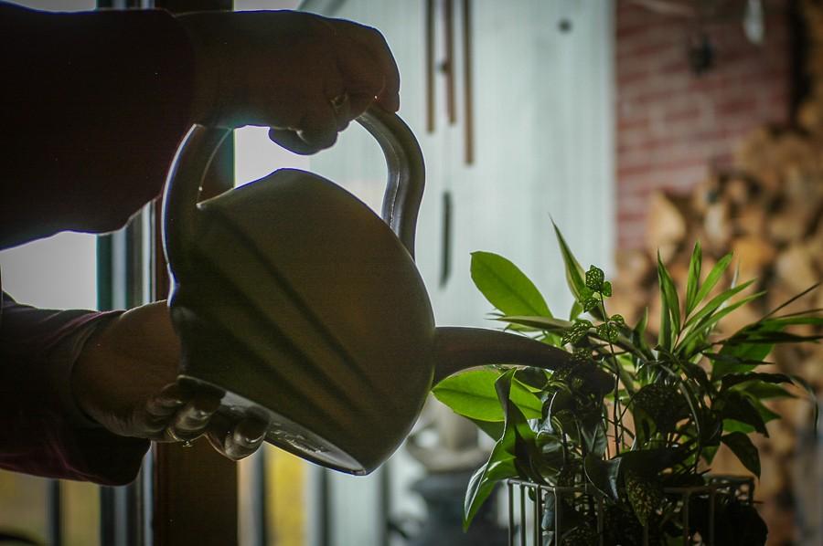Plant Watering.jpg