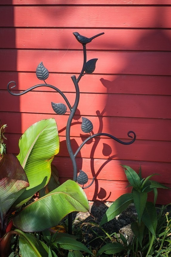 Plant with Wall in North Conway (1 of 1).