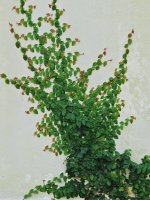 Plant00_s.jpg
