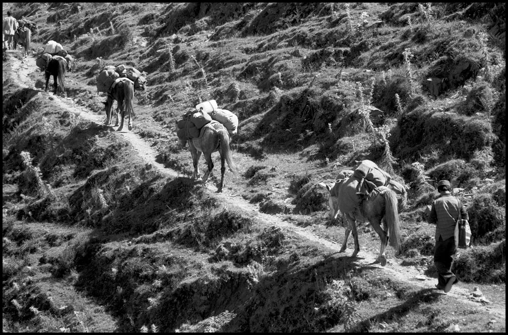 ponies-1.jpg