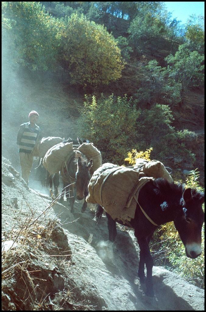 Ponies_Keylong.jpg