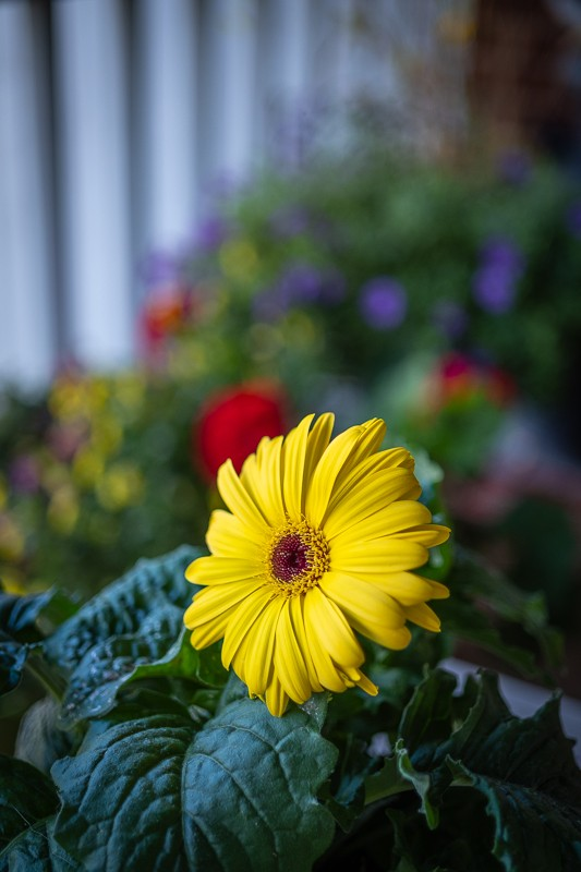 Porch Flower.jpg