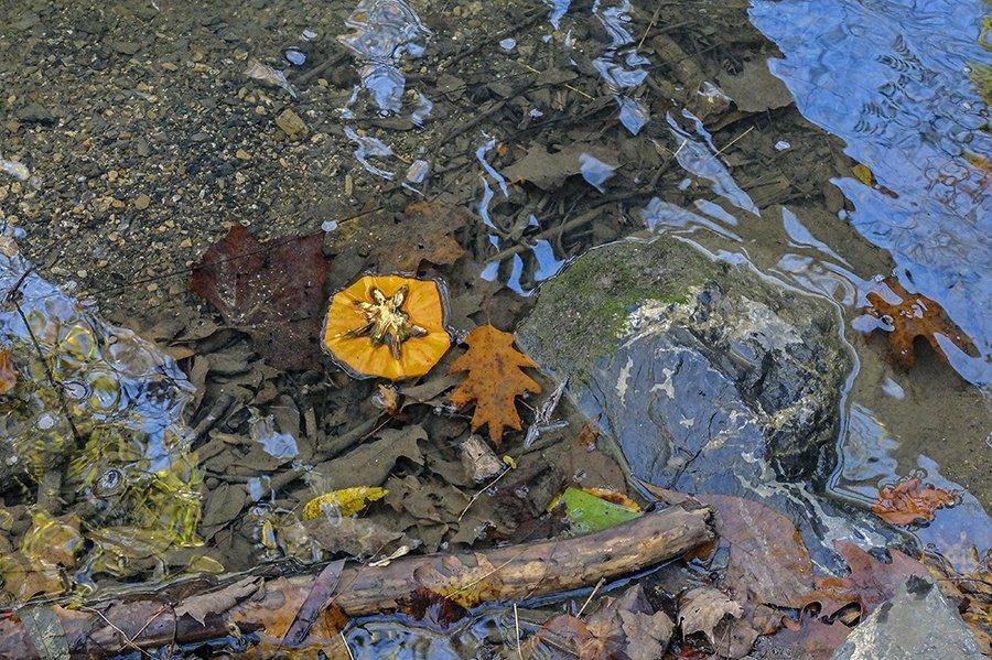 pumpkintop.jpg