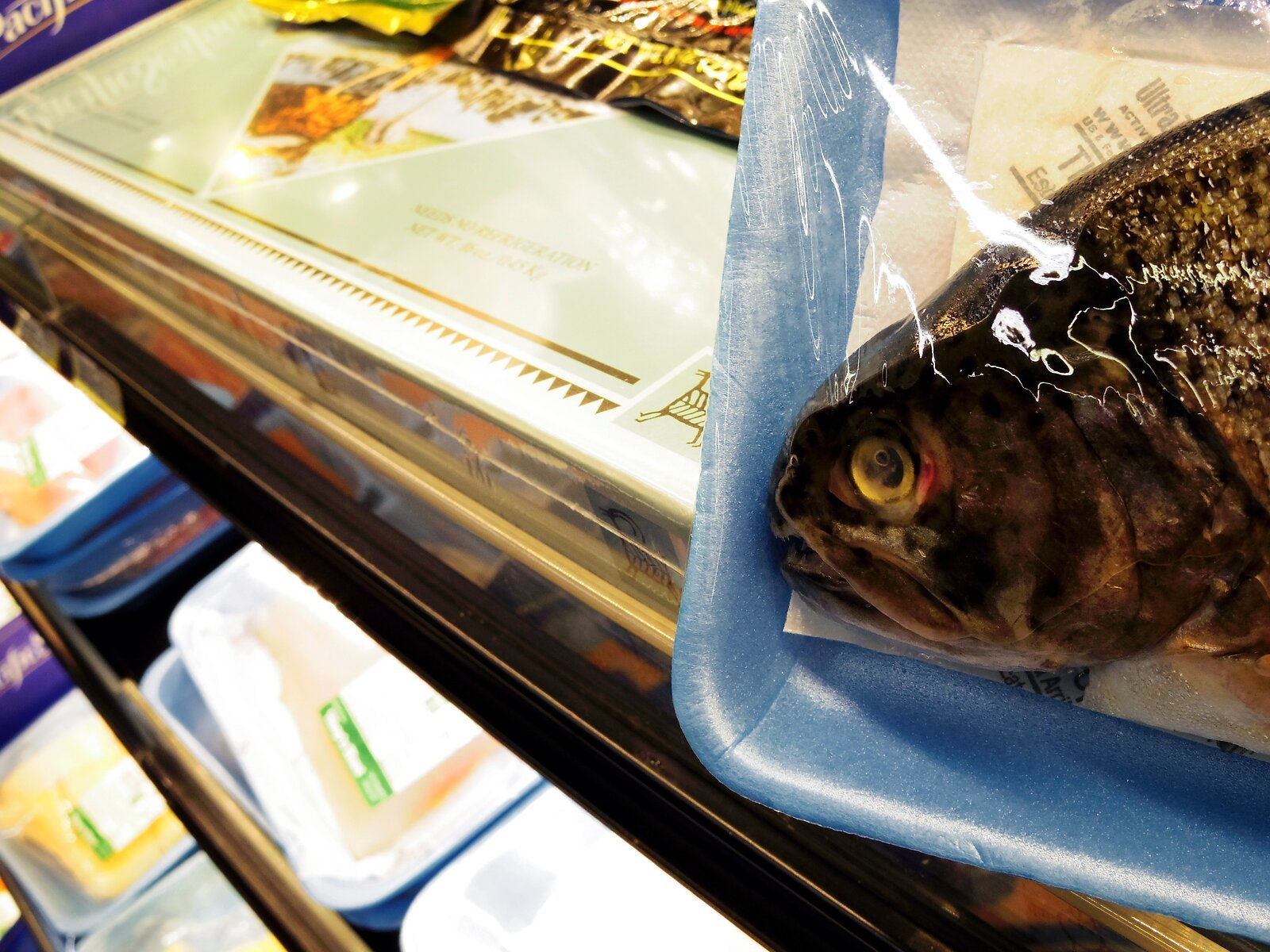 Q7_fish_head_in_market.jpg