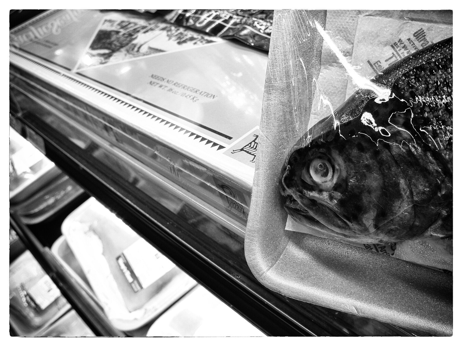Q7_fish_head_in_market(silver.efex).jpg