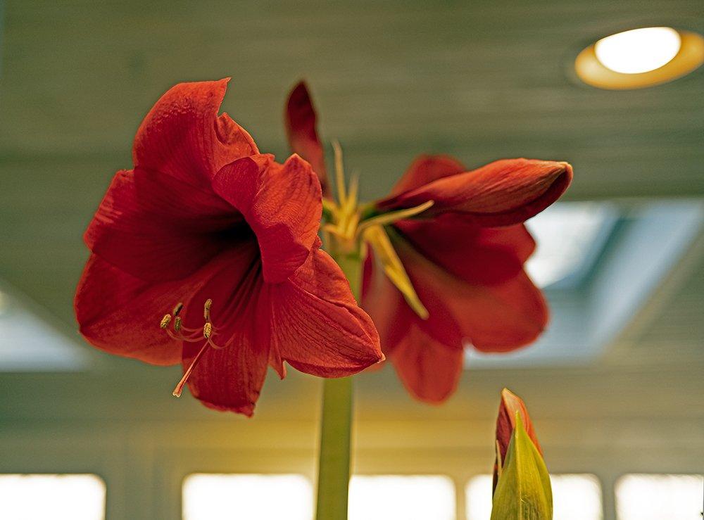 redflower2.jpg