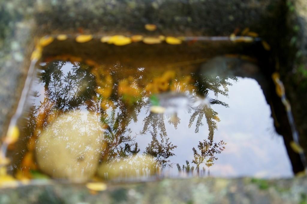 Reflection_s_.jpg