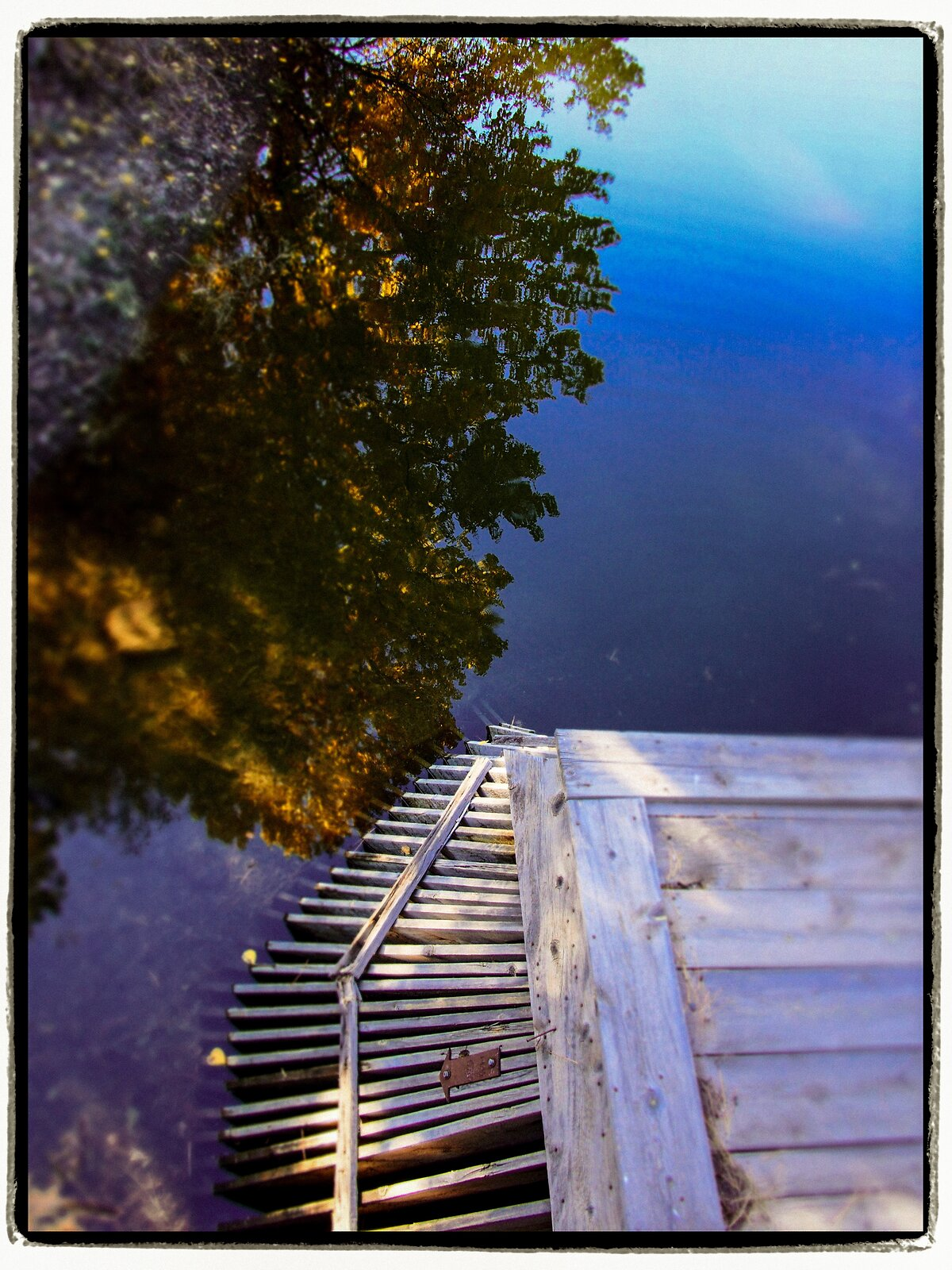 Reflections & Branches (Diorama-Kodak Memorial).jpg