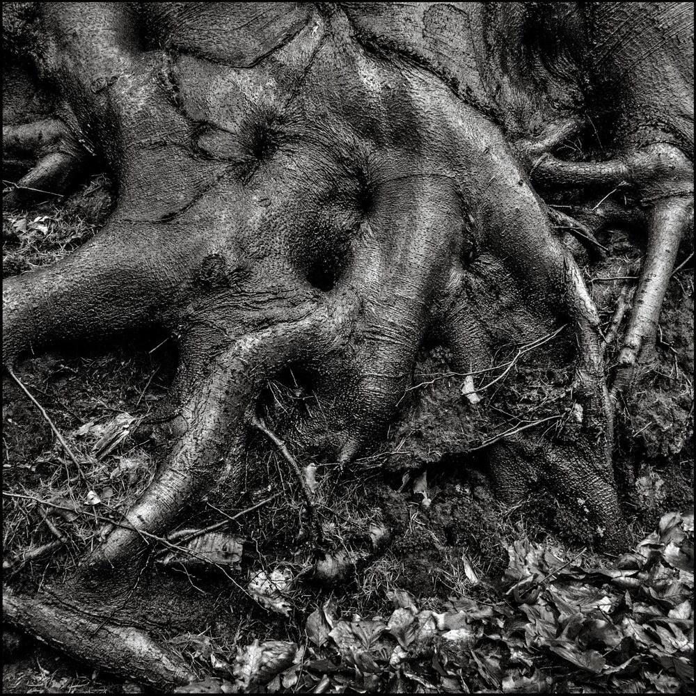 roots a1-42l-1k.jpg