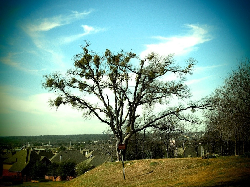 rr tree.jpg