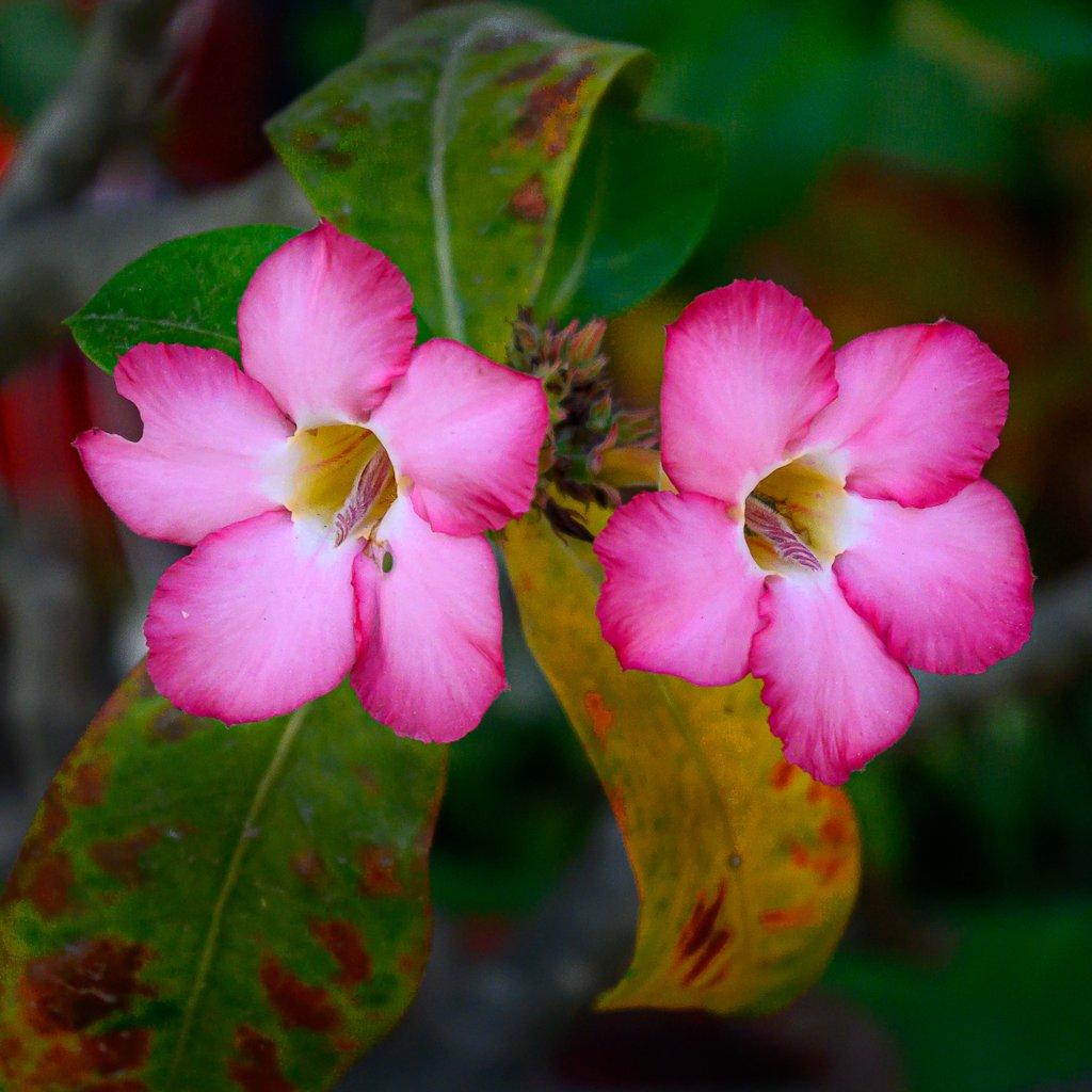 rw-bloss-1.jpg