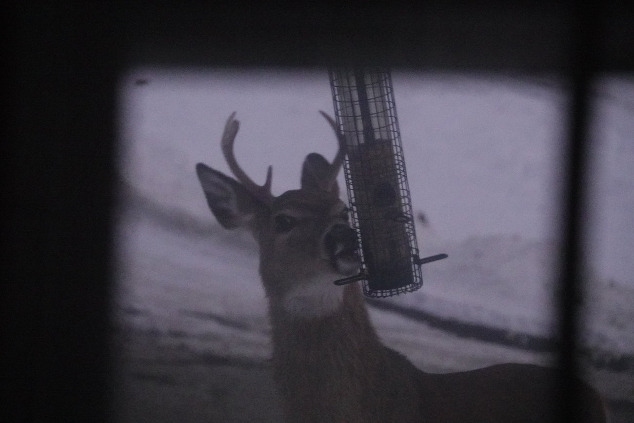 RX10 buck at feeder and misc 017.JPG