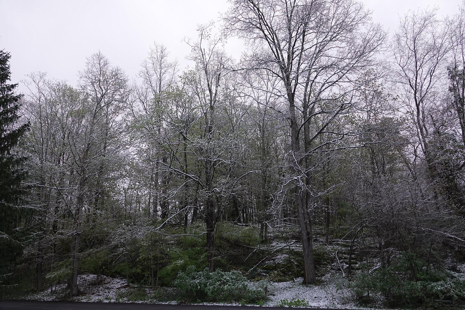 RX10 May 9 2020 snowstorm 005.JPG