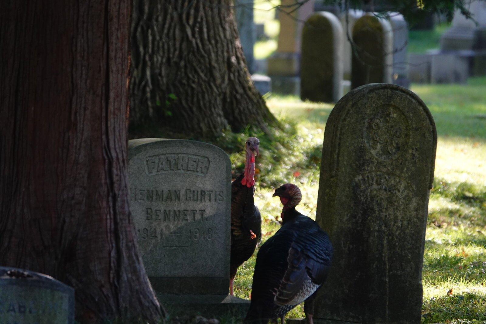 RX10 Oakwood turkeys and scenes 010.JPG
