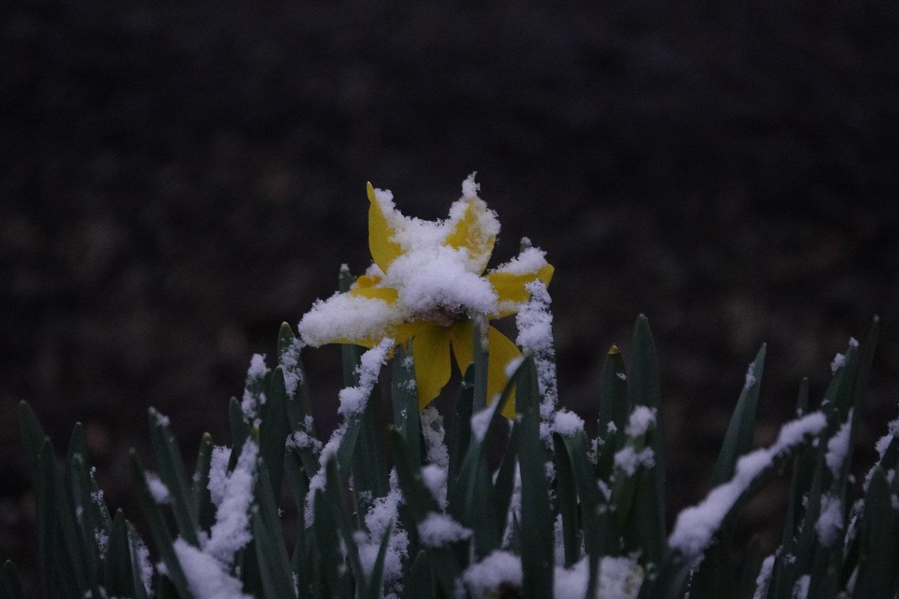 RX10 snow on flowers 006.JPG