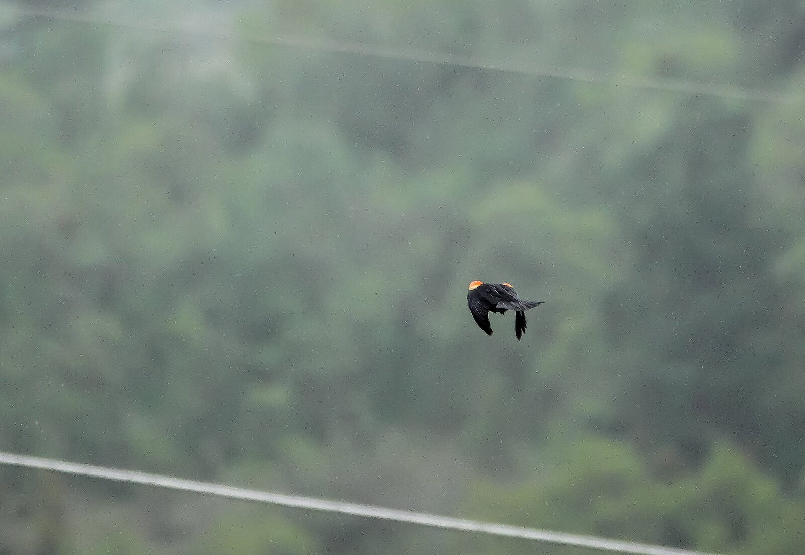RX10_Apr24_21_blackbird_flying#6.jpg