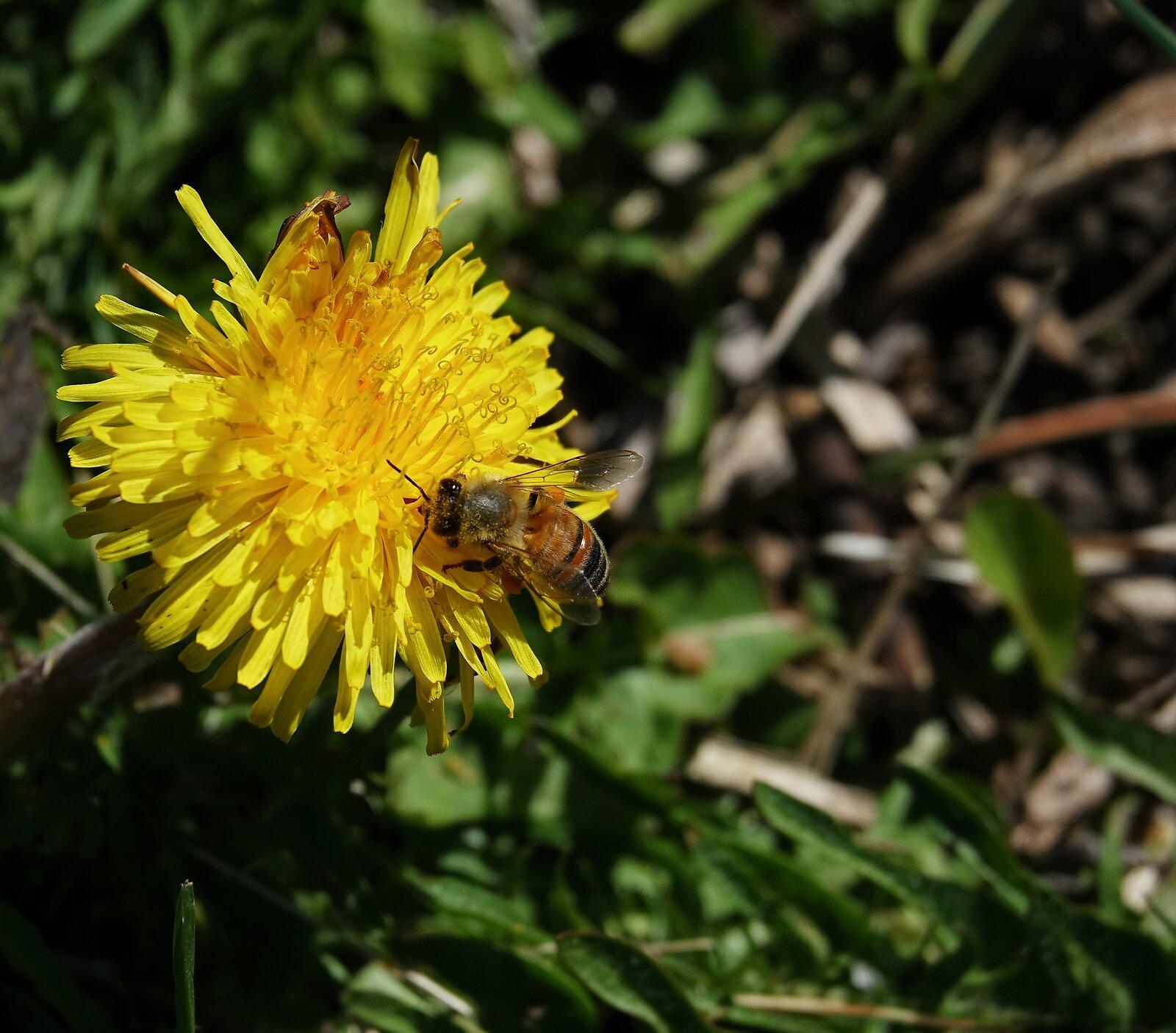 RX10_Apr5_21_busy_as_a_bee#1.jpg