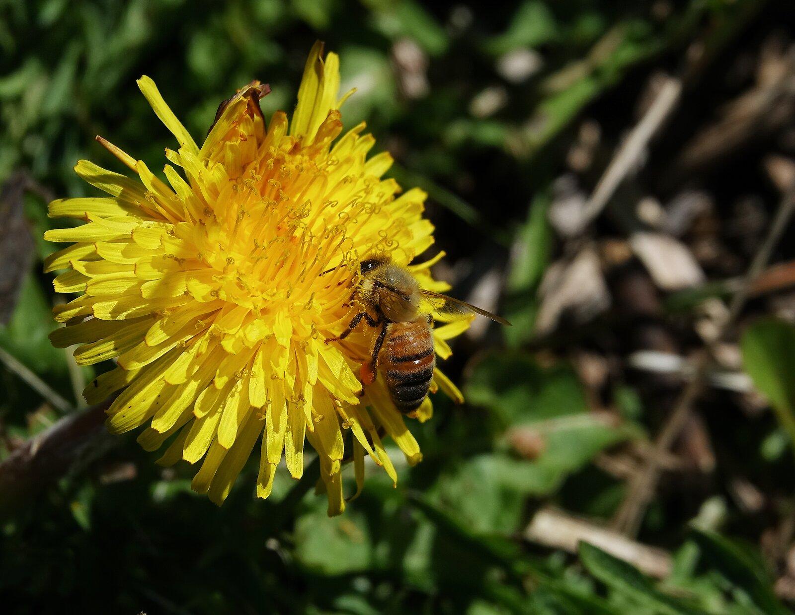 RX10_Apr5_21_busy_as_a_bee#2.jpg
