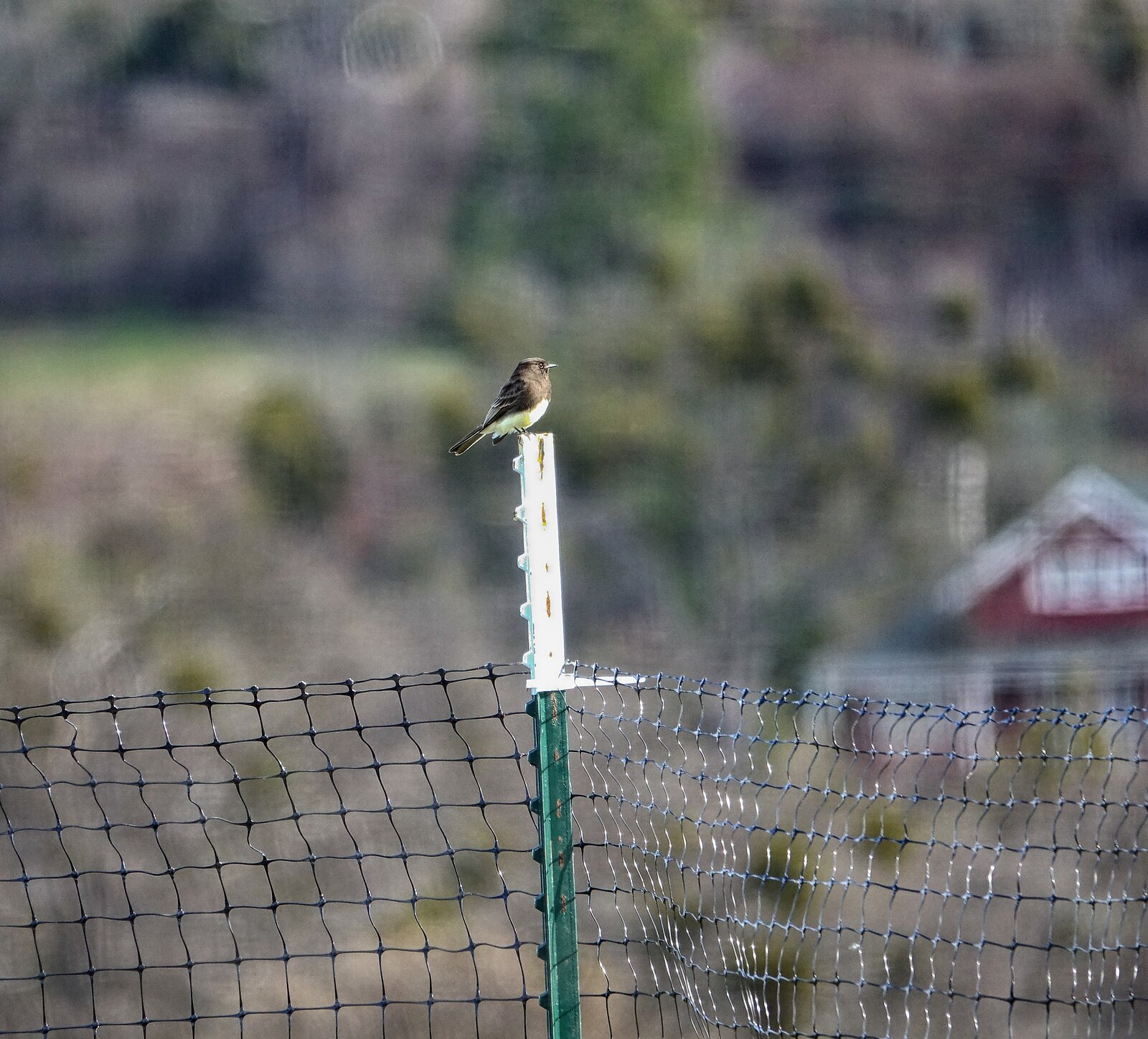 RX10_Mar20_21_black_Phoebe.jpg