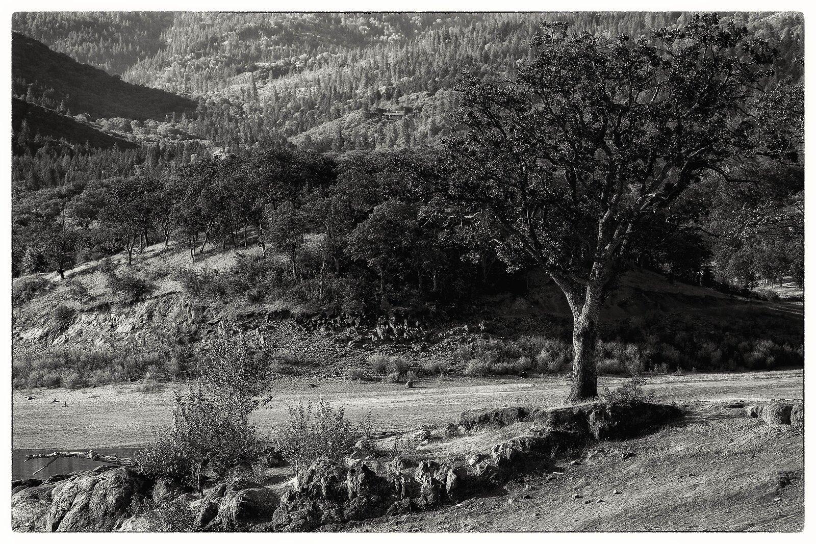RX10_May14_21_trees_by_lake(silver.efex).jpg