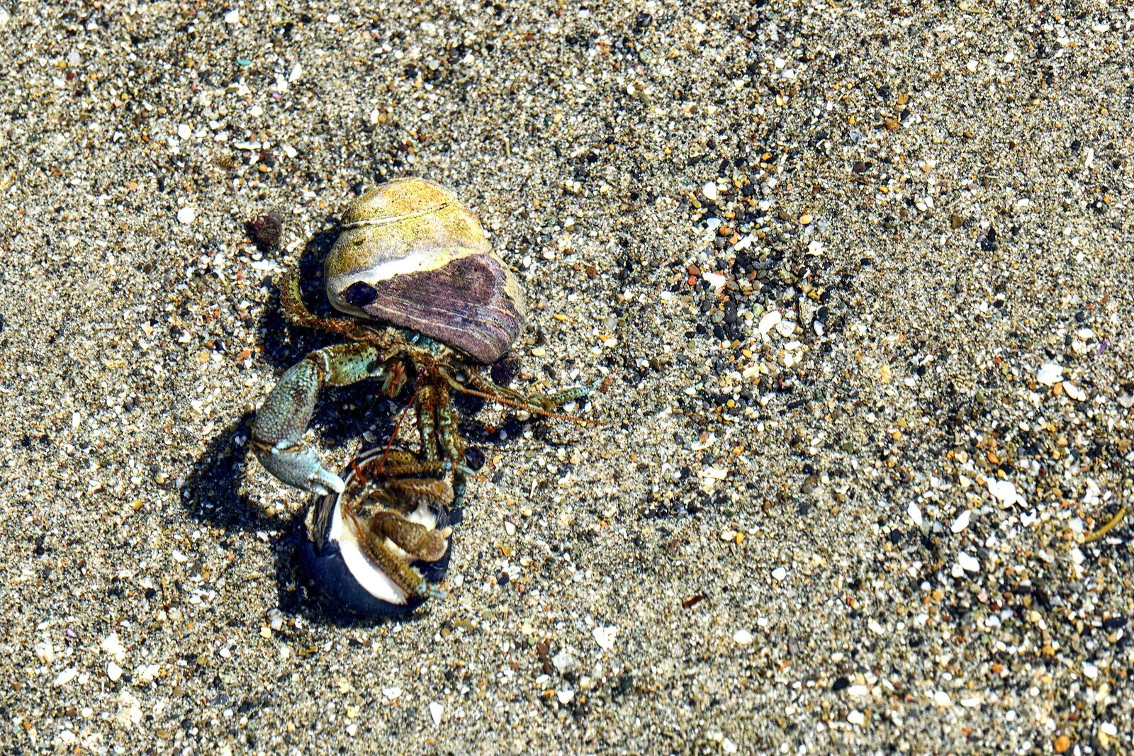 RX10_May18_21_2_hermit_crabs#1.jpg