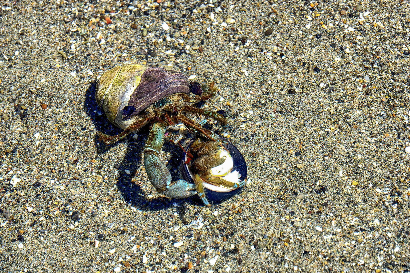 RX10_May18_21_2_hermit_crabs#2.jpg