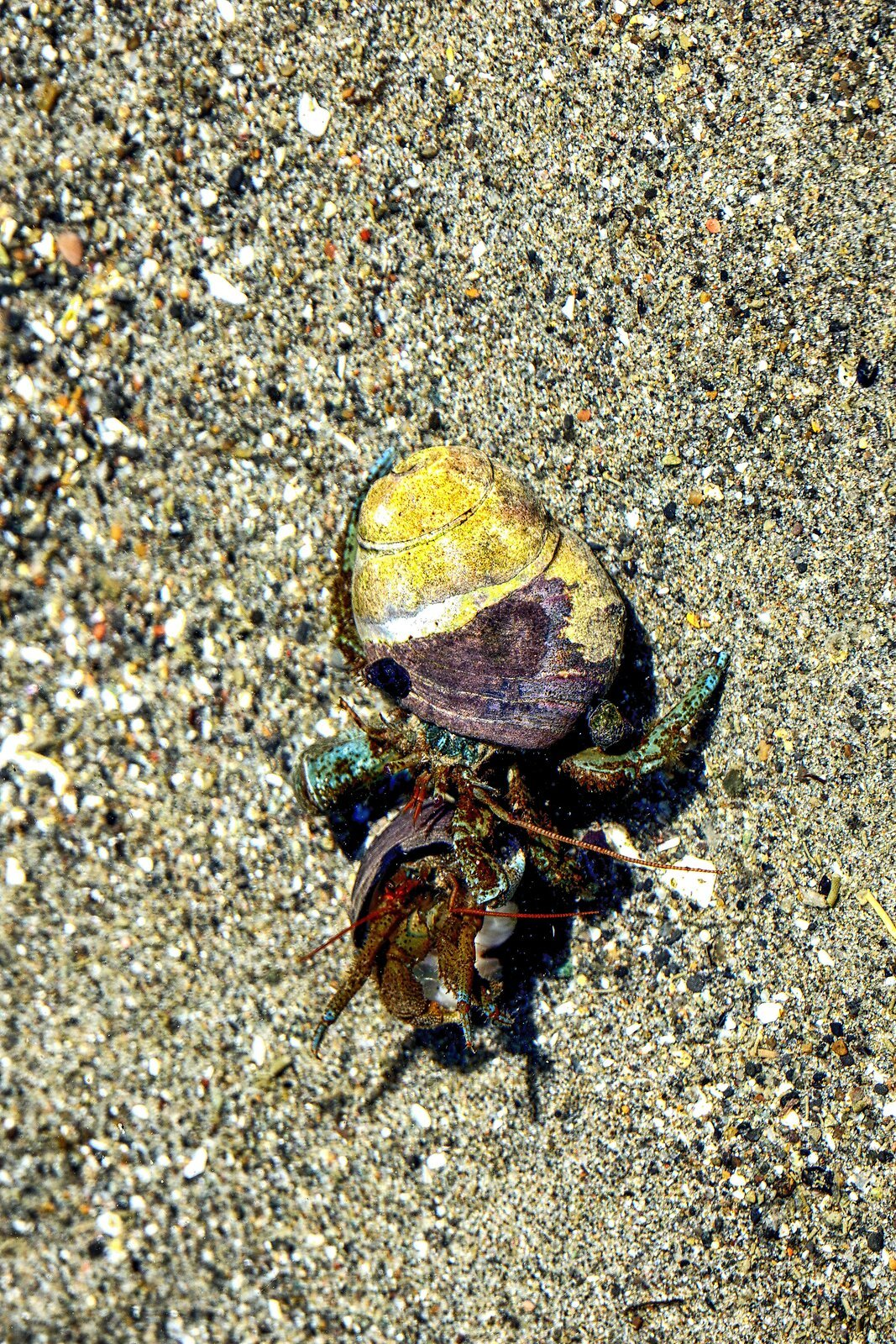 RX10_May18_21_2_hermit_crabs#3.jpg