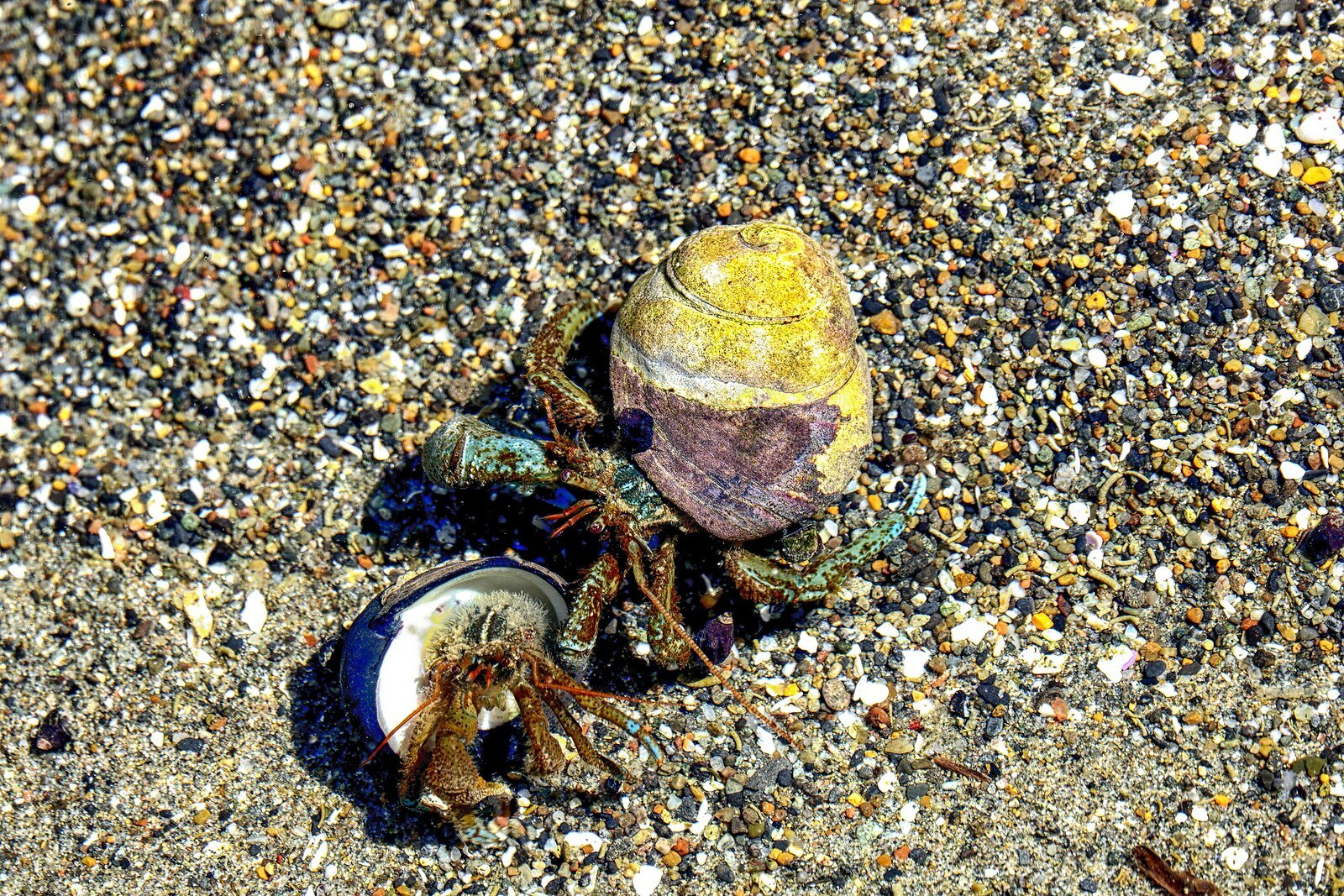 RX10_May18_21_2_hermit_crabs#4.jpg
