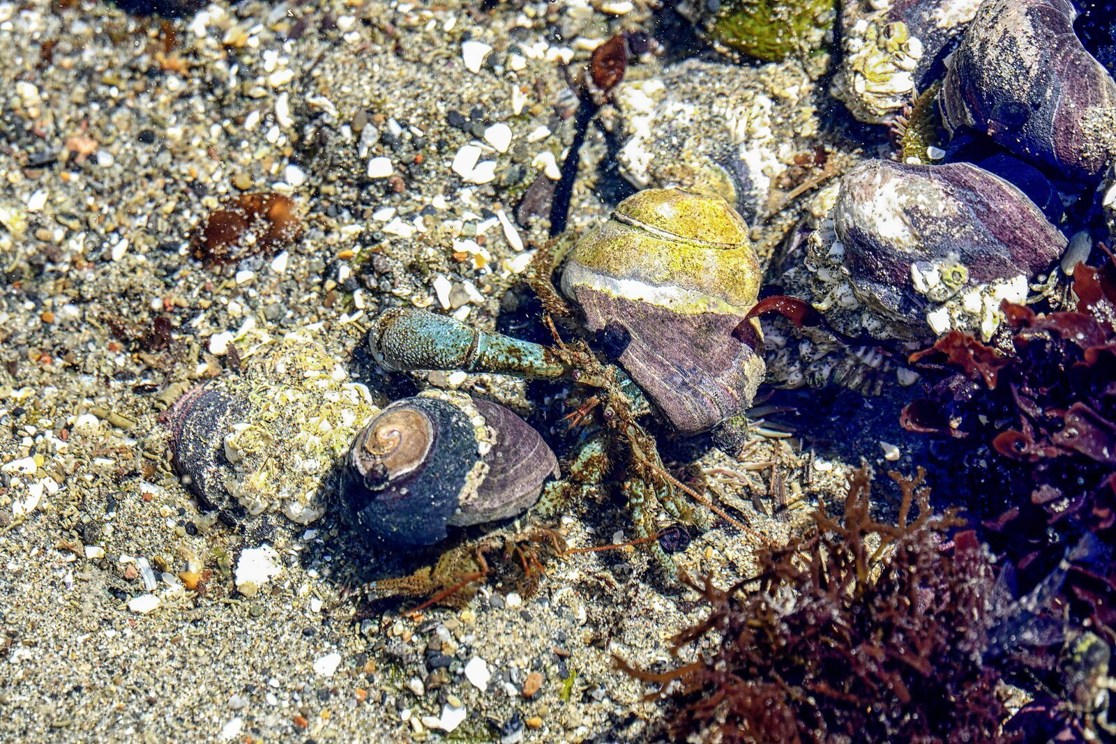 RX10_May18_21_2_hermit_crabs#6.jpg