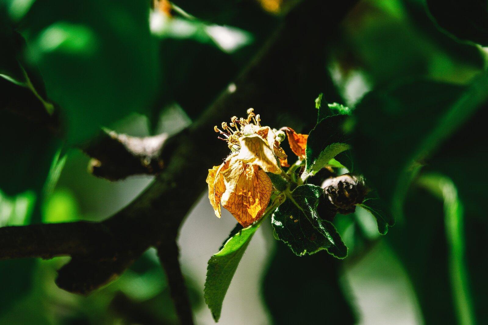 RX10_May7_21_May_flower.jpg