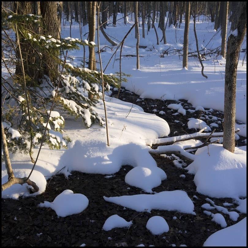 rx1_winter_wonderland.jpg