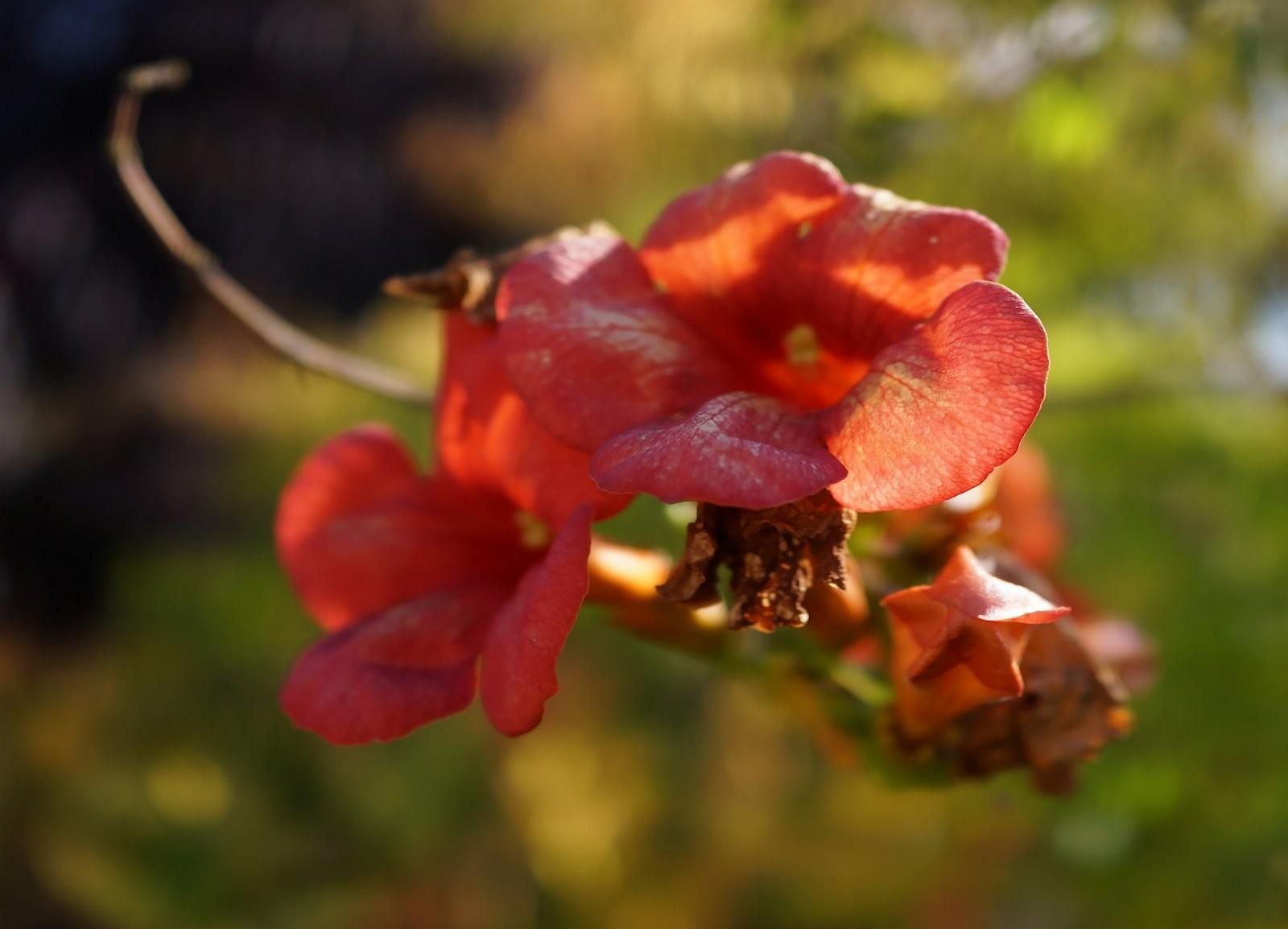 schöne Blüte.jpg