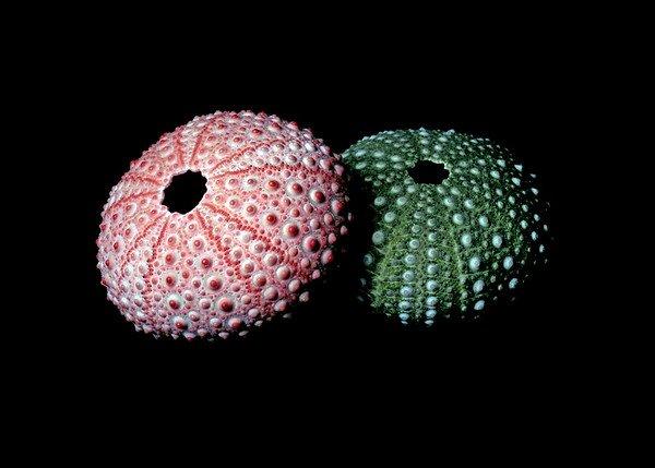 seashells%20sx502017-M.jpg