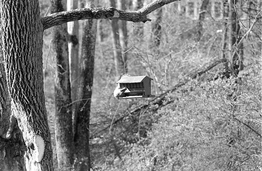 Series 1 210mm Squirrel.jpg