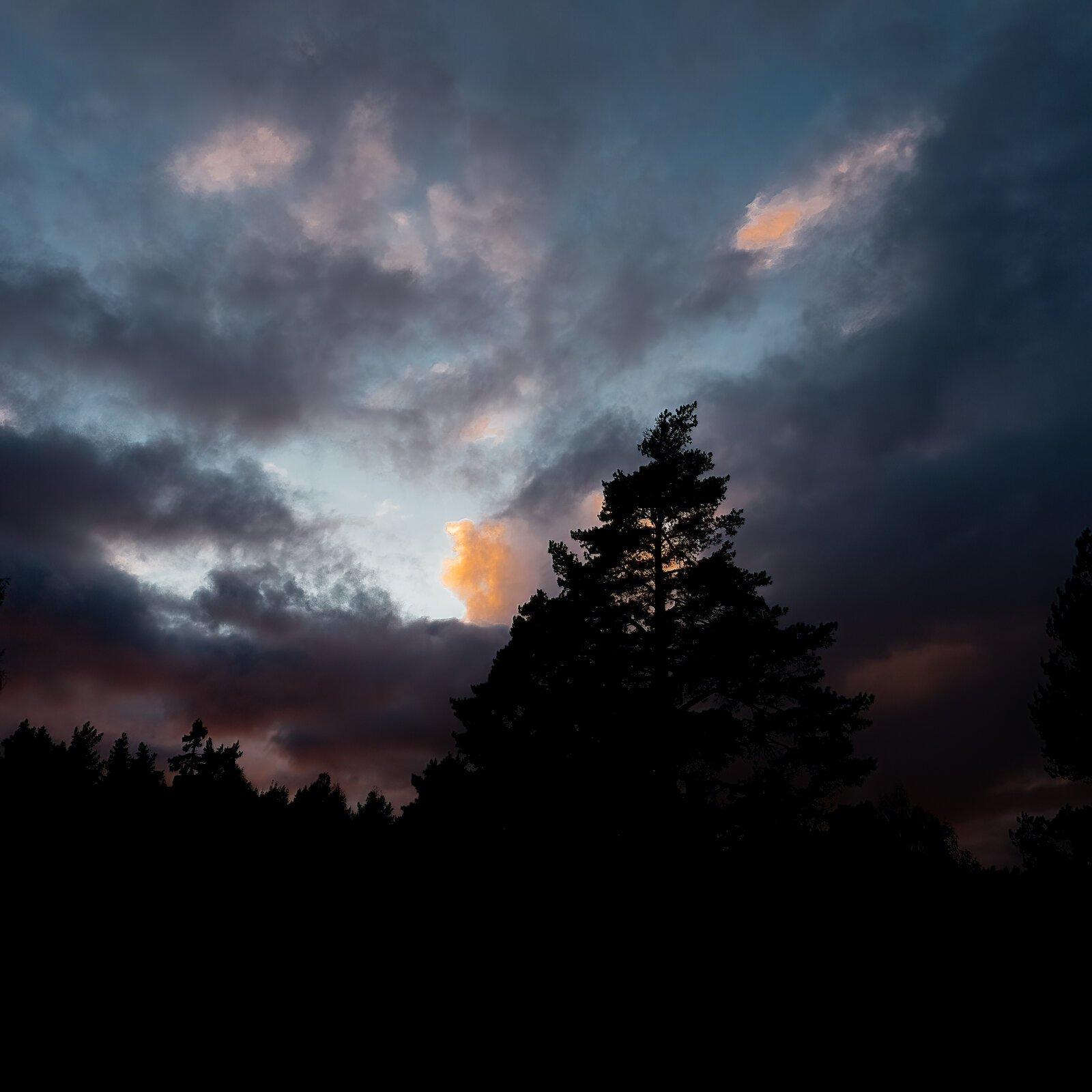 Sky tree.jpg