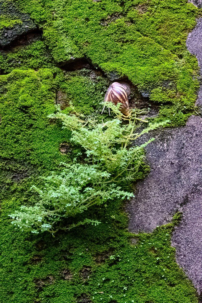 snail-1.jpg