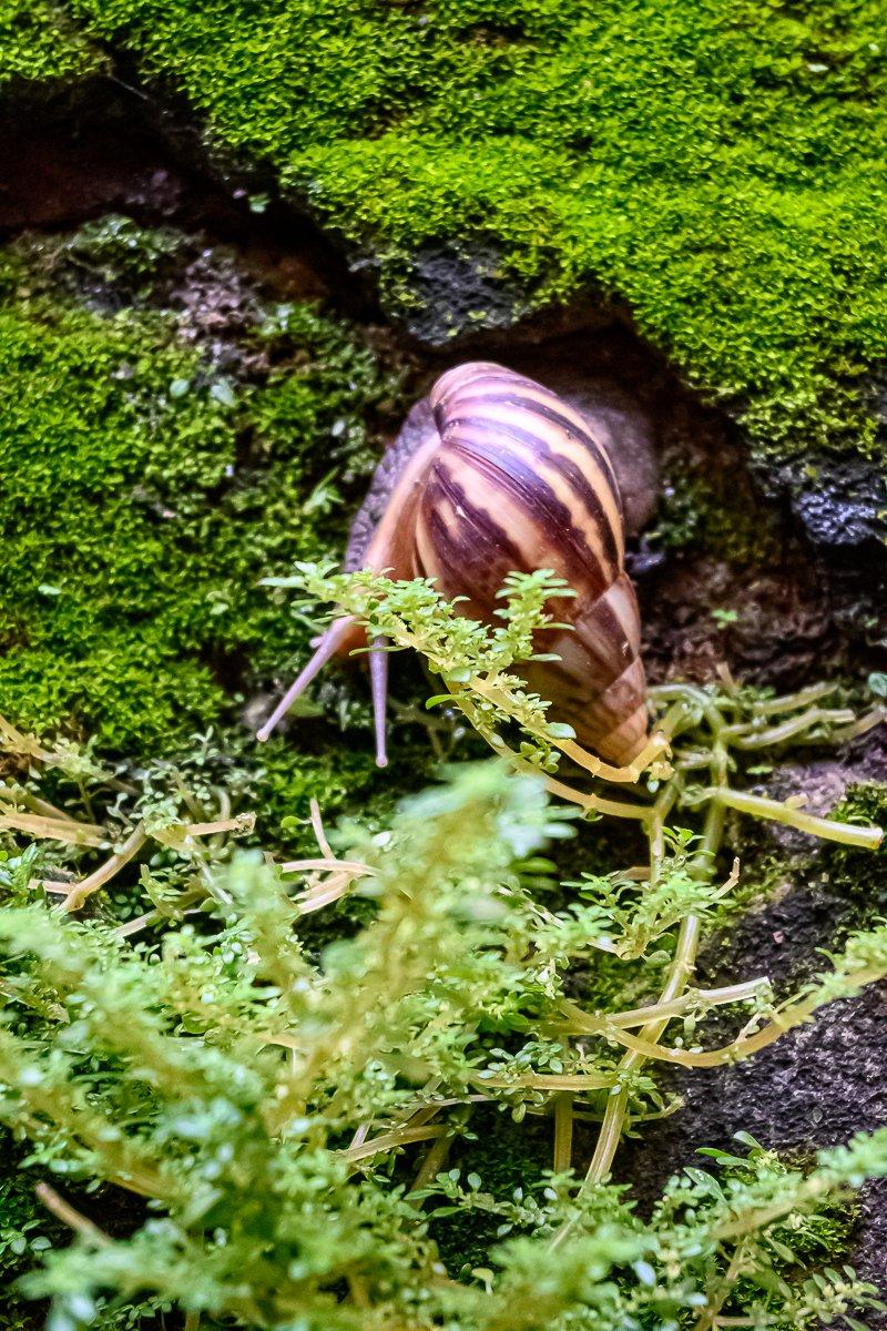 snail-2.jpg
