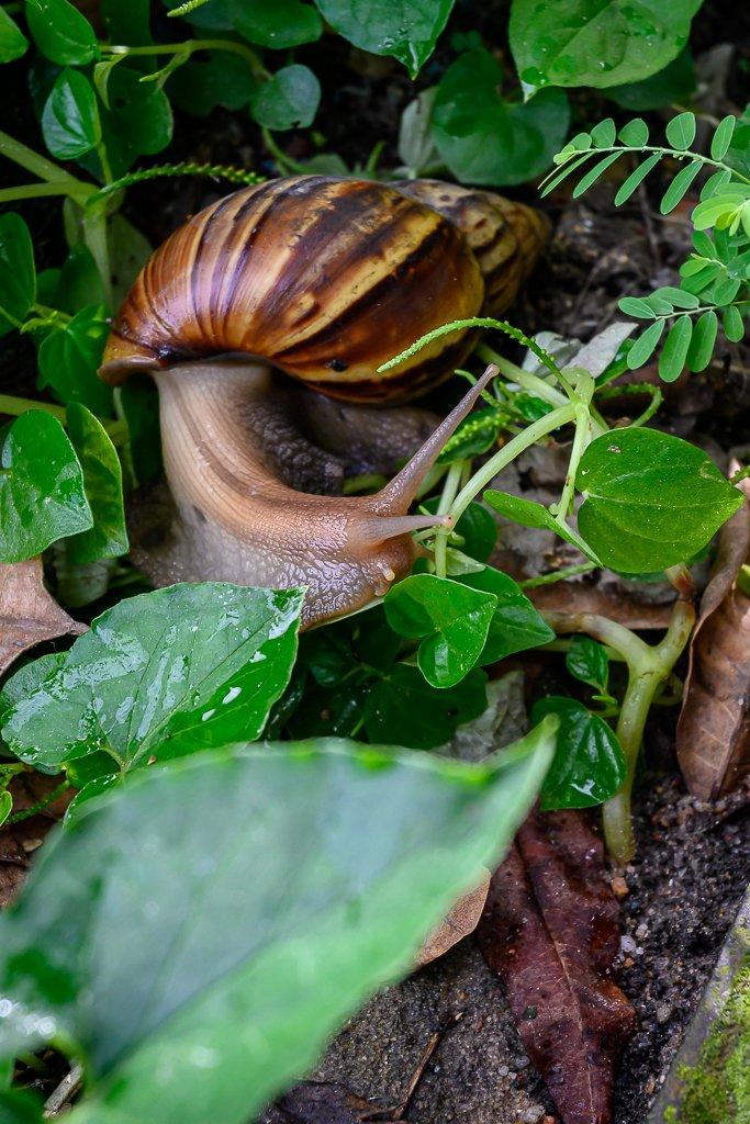 snail-3.jpg
