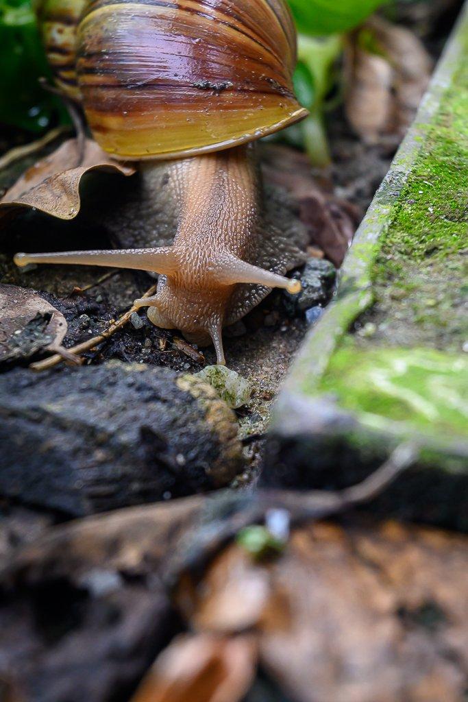 snail-4.jpg