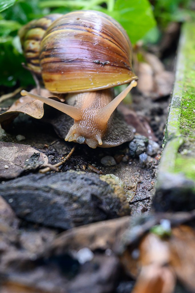 snail-5.jpg