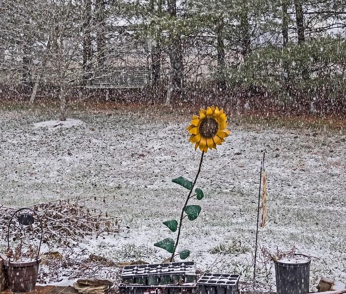 snowdaisy3-L.jpg
