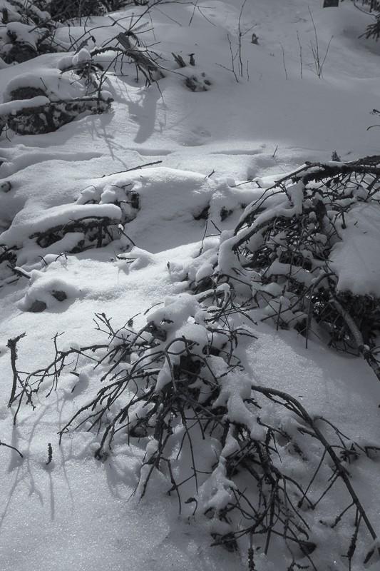 Snowshoe Trail (1 of 1).jpg