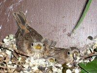 Sparrow15a_s.jpg