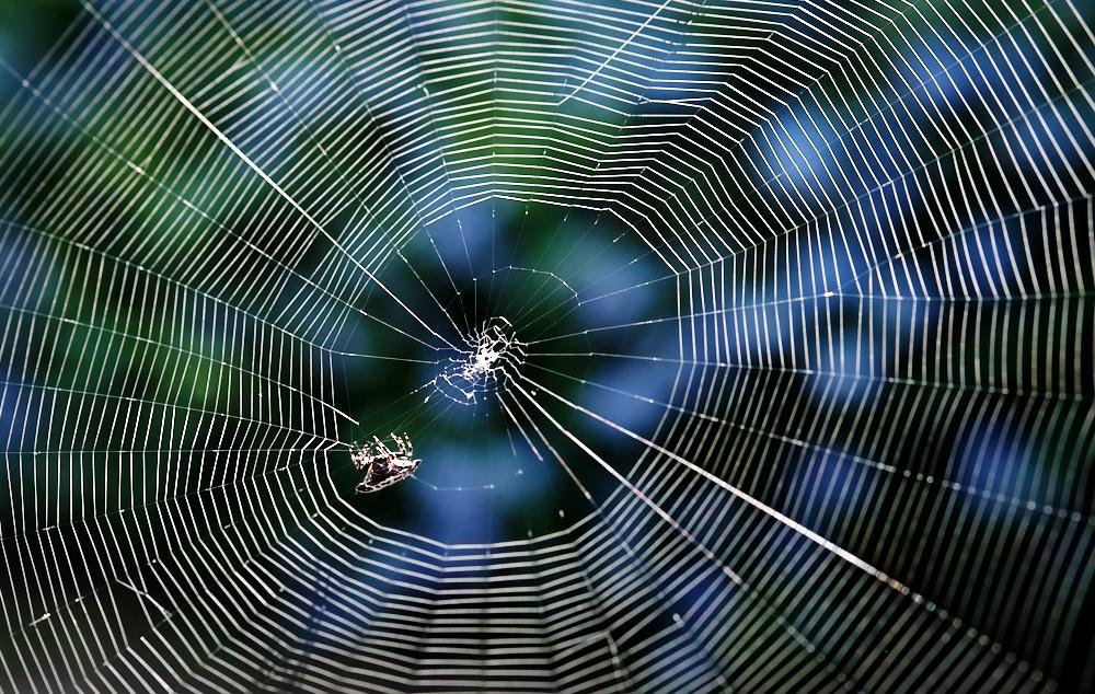 Spider web 1.jpg