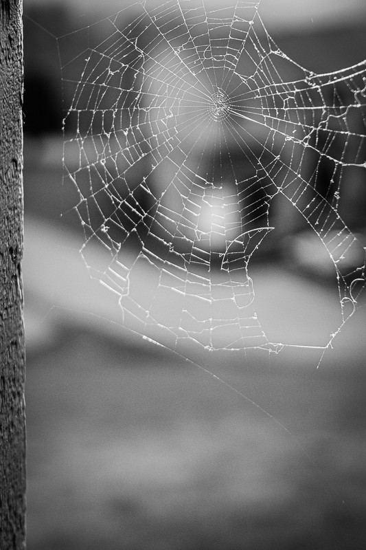Spider Web on Porch.jpg